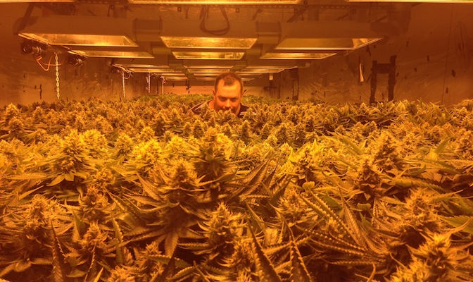 Damian Christie on legalisation in Colorado