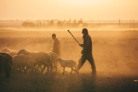 Nomads tend their flocks in Fars Province, Iran